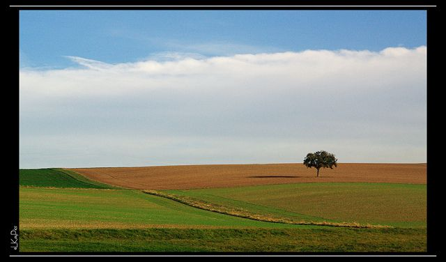 paisagem-comp