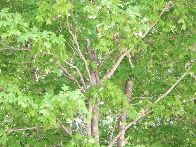 branchesgood2