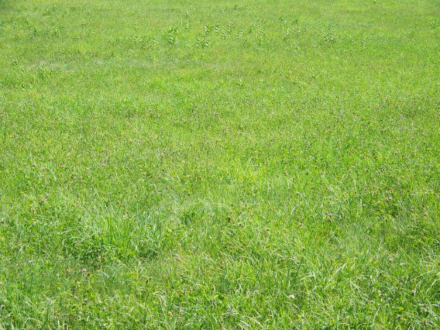 grassgood1