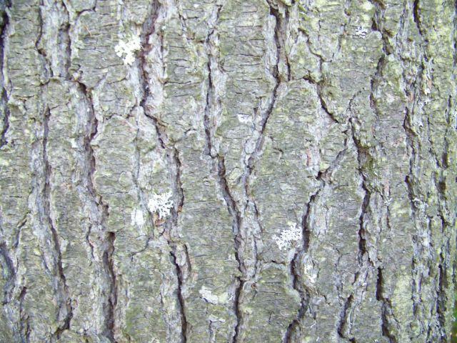 old-bark1