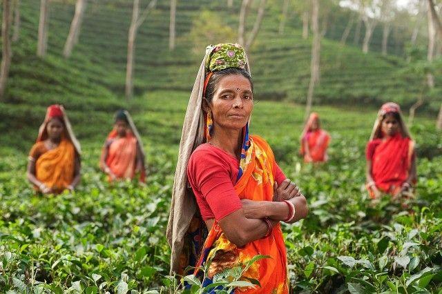 As pessoas na Índia em uma fazenda