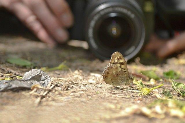 borboleta em foco
