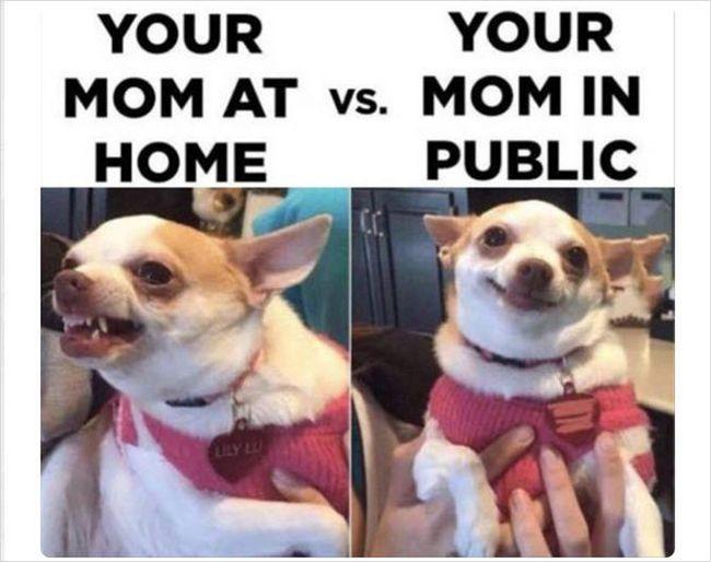 Pinterest mãe cão engraçado